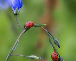 Blumenwiese_Apetlon_Illmiz